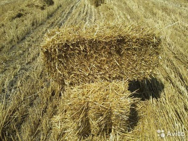 Продам солому ячневую, пшеничную в тюках