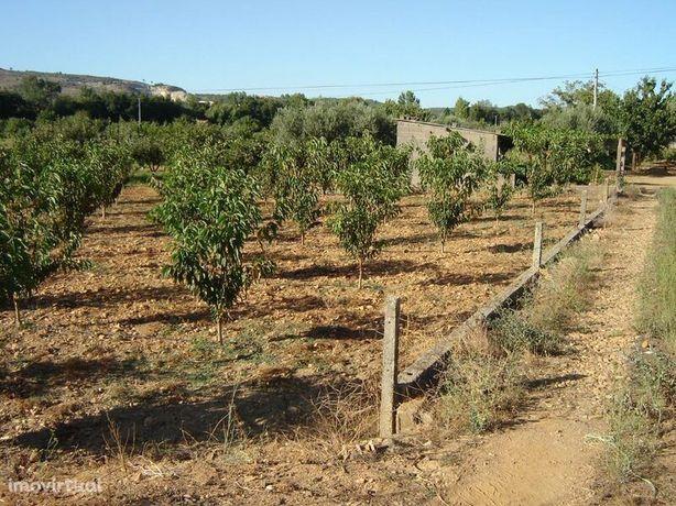Terreno Agrícola Capinha Fundão