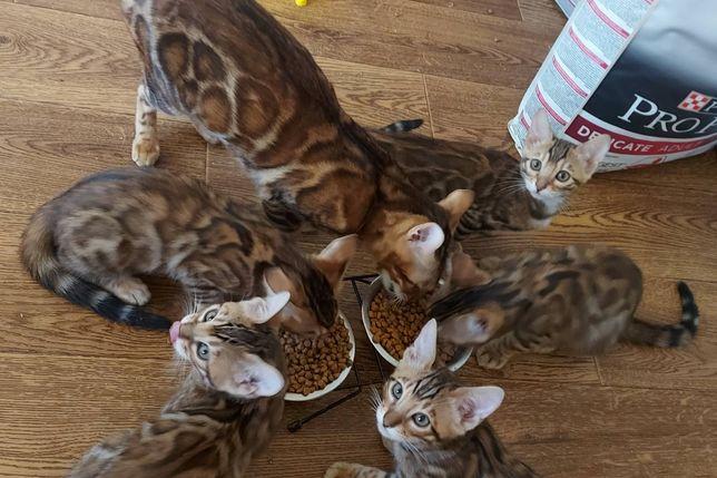 3х місячні кошенята. Доставка можлива