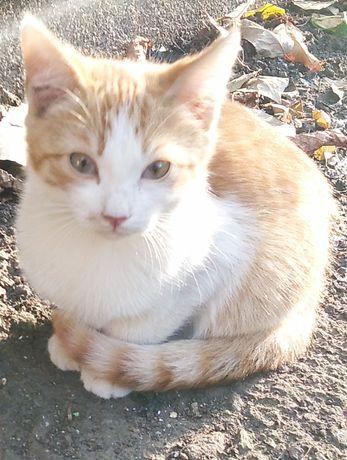 Замечательный котенок