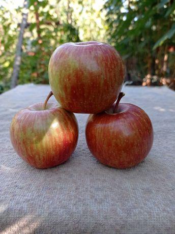 Саженцы яблонь и винограда.