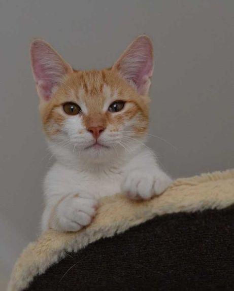 юний рудо-біленький котичок в пошуках домівки 5м