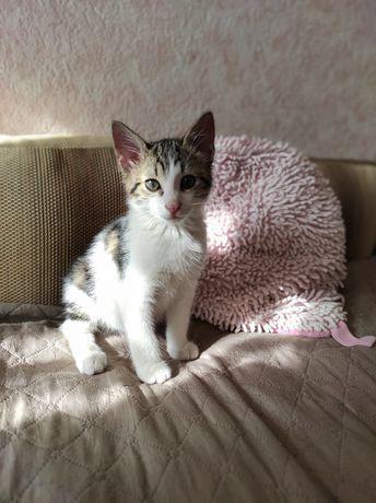 Котик, кошеня, 3 місяці Рудік