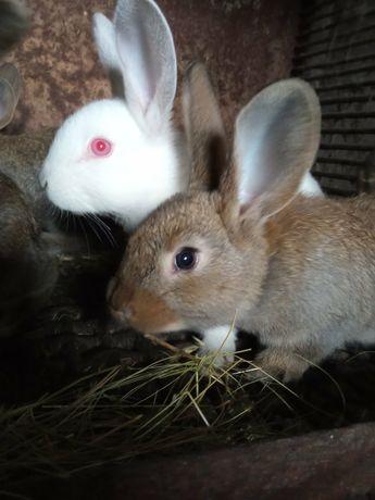 Продам молодняк кроликов 1,5 месяца