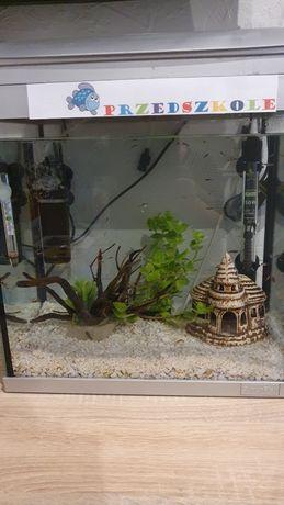 Akwarium 20l używane