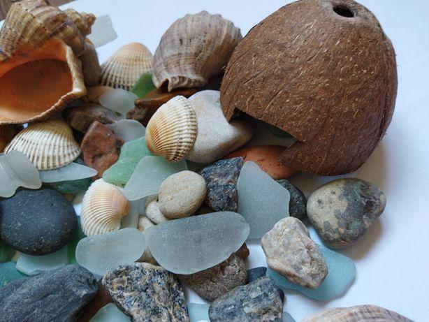 Камни, ракушки, для декора в аквариум.
