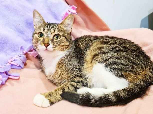 Прекрасная кошка Вуся ищет дом, 1 год, стерилизована, котенок, кот