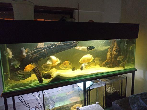 Tronco grande para aquário 120cmx65cm
