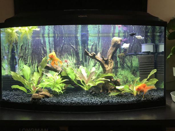Żywe ryby: tetry, molinezje, zwinniki, neonki, żółtaczki indyjskie...