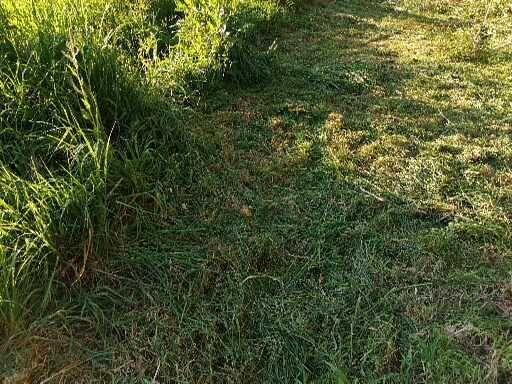 Limpeza terrenos com roçadora