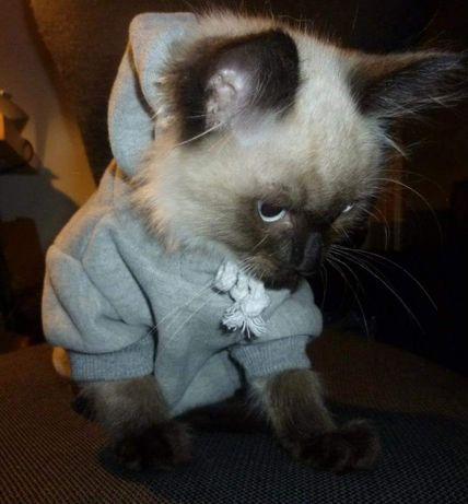 Camisola para animal