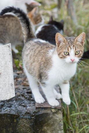 Котенок Мотя ищет дом