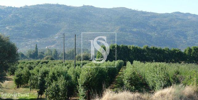 Quinta Agrícola em Lamaçais - Cova da Beira