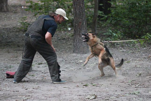 GERMAN SHEPHARD DOG. Немецкая Овчарка кобели, суки резерв.