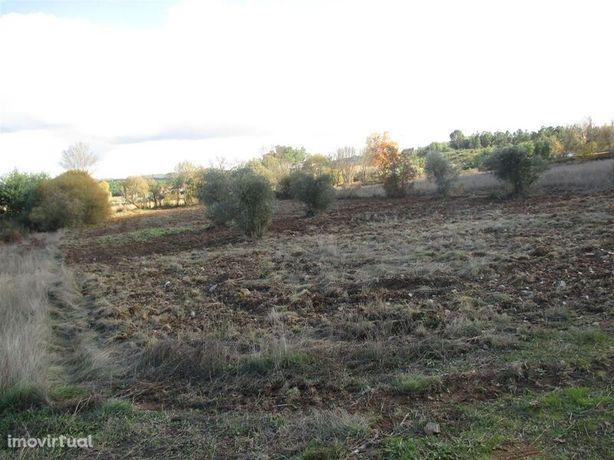 Terreno plano Enxames Fundão