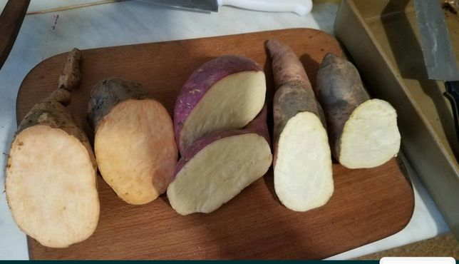 Батат для еды , сладкий картофель 5 сортов