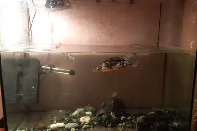 Большой аквариум и 2 красноухие черепахи