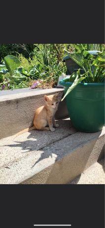 Gatinhos bebes para adoçao