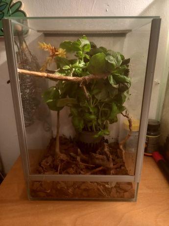 Straszyk plus terrarium