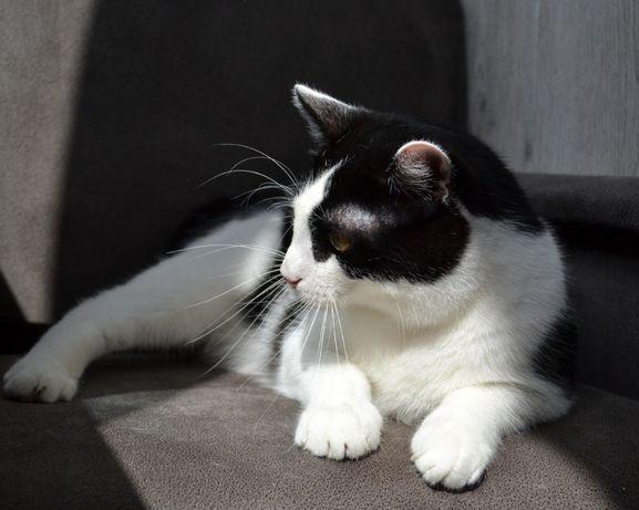 муркотливий котик 1р
