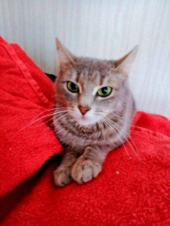 Василиса - кошечка с необыкновенными изумрудными глазами ищет дом!