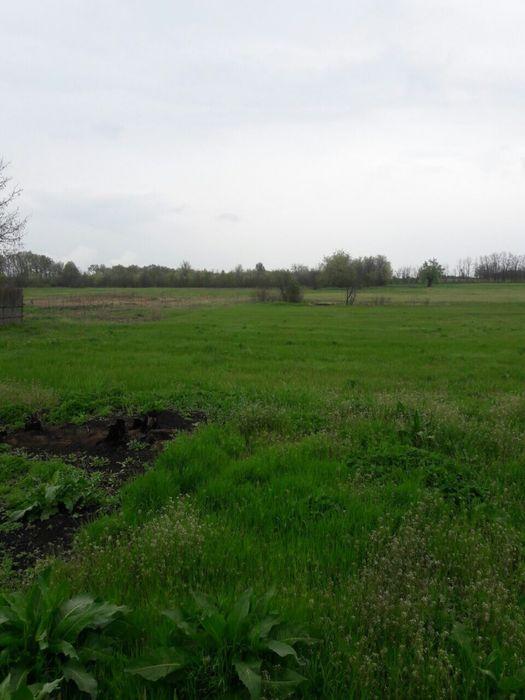 Продам земельный участок возле пгт Кривое Озеро Кривое Озеро - изображение 1