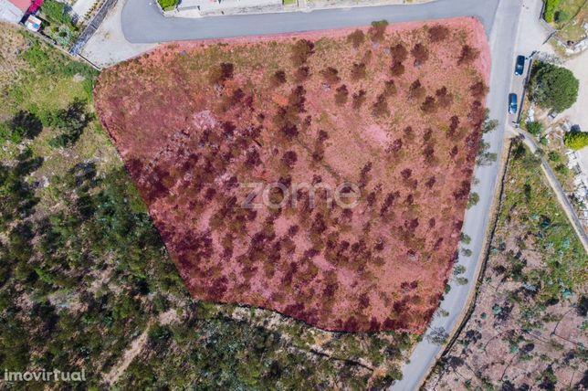 Terreno Urbanizável c/ 5200 m2 em Vilar do Monte - Barcelos