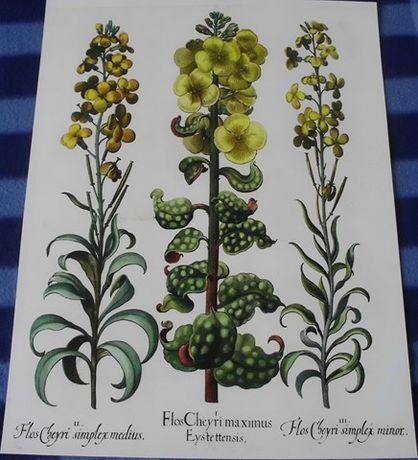 1713 r. ZIELNIK (2) - KWIATY reprodukcje XVIII w. grafik do wystroju