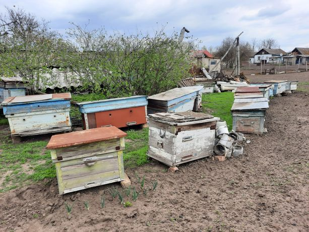 Продам бджолині ВУЛИКИ (улики)
