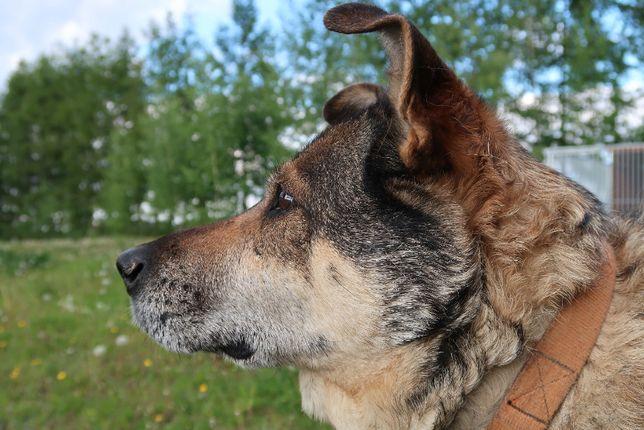 Przekochany Horacy już za długo czeka na dom- psiak do adopcji