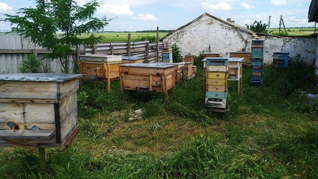 Пчелы в ульях разной конструкции