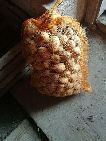 Ziemniak sadzenniak LORD żółte