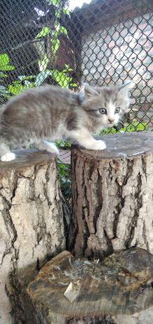 Котенята шукають дім
