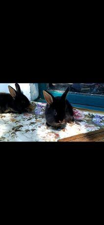 Декоративный кролик. Опт. Есть и кролики обычные