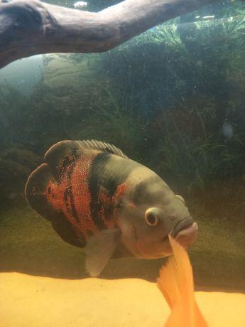 Ryby dj akwarium