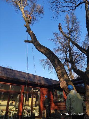 alpinistyczna wycinka, pielegnacja drzew trudnych, podnosnik, Warszawa