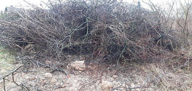 Oddam gałęzie po drzewach owocowych i dopłacę za  ich zabranie