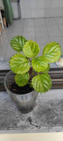 Várias mudas de plantas