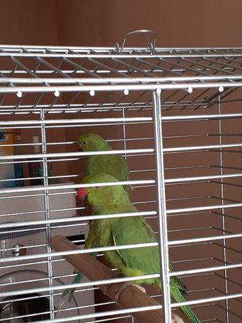 Vendo dois pássaros verdes