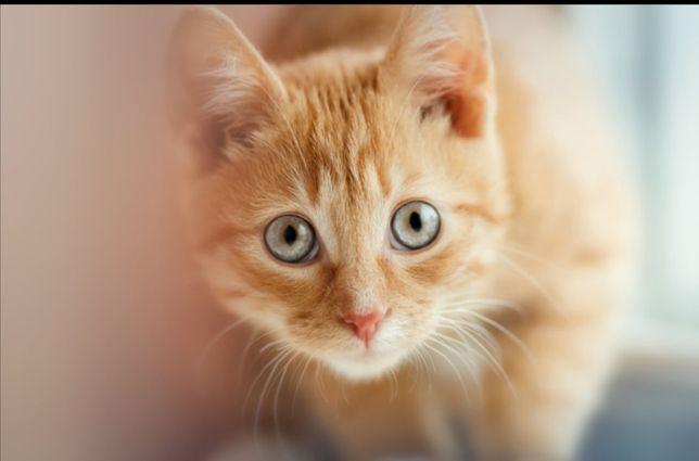 Oddam młoda kociczke