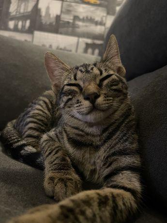 Adopção gatinhas