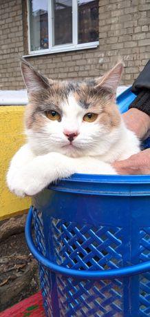 Кошке (8 мес.)очень нужен дом