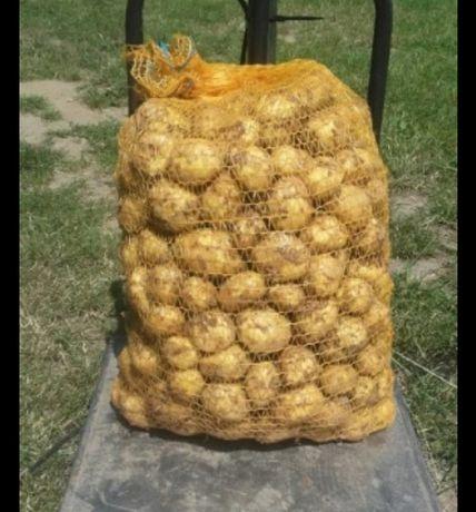 Ziemniaki mlode odmiany denar ładne bez parcha żółte w środku