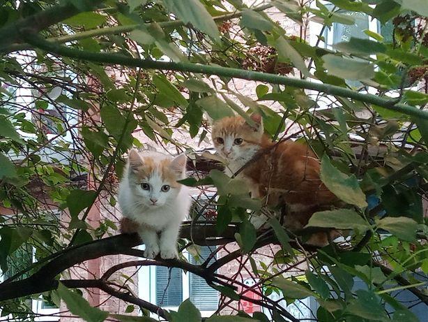 Кошенята в добрі руки терміново