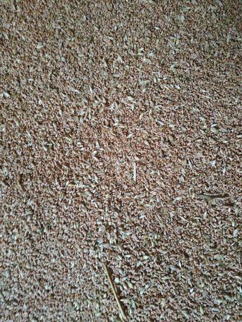 Продам Зерно пшениці та ячменю