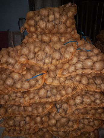 Ziemniak Jadalne (Gala Colomba)