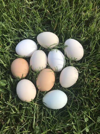 Jajka swojskie ekologiczne