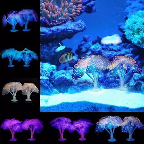 Wodne rośliny fluoroscencyjne. Promocja!