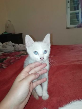Dou gatinhos com 2 meses