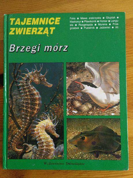 Książka dla dzieci: Tajemnice zwierząt: Brzegi mórz